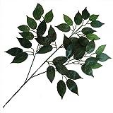 5 Steli di Seta Artificiale Verde Ficus foglie ca 200 foglie - nuziale fogliame floreale artigianato