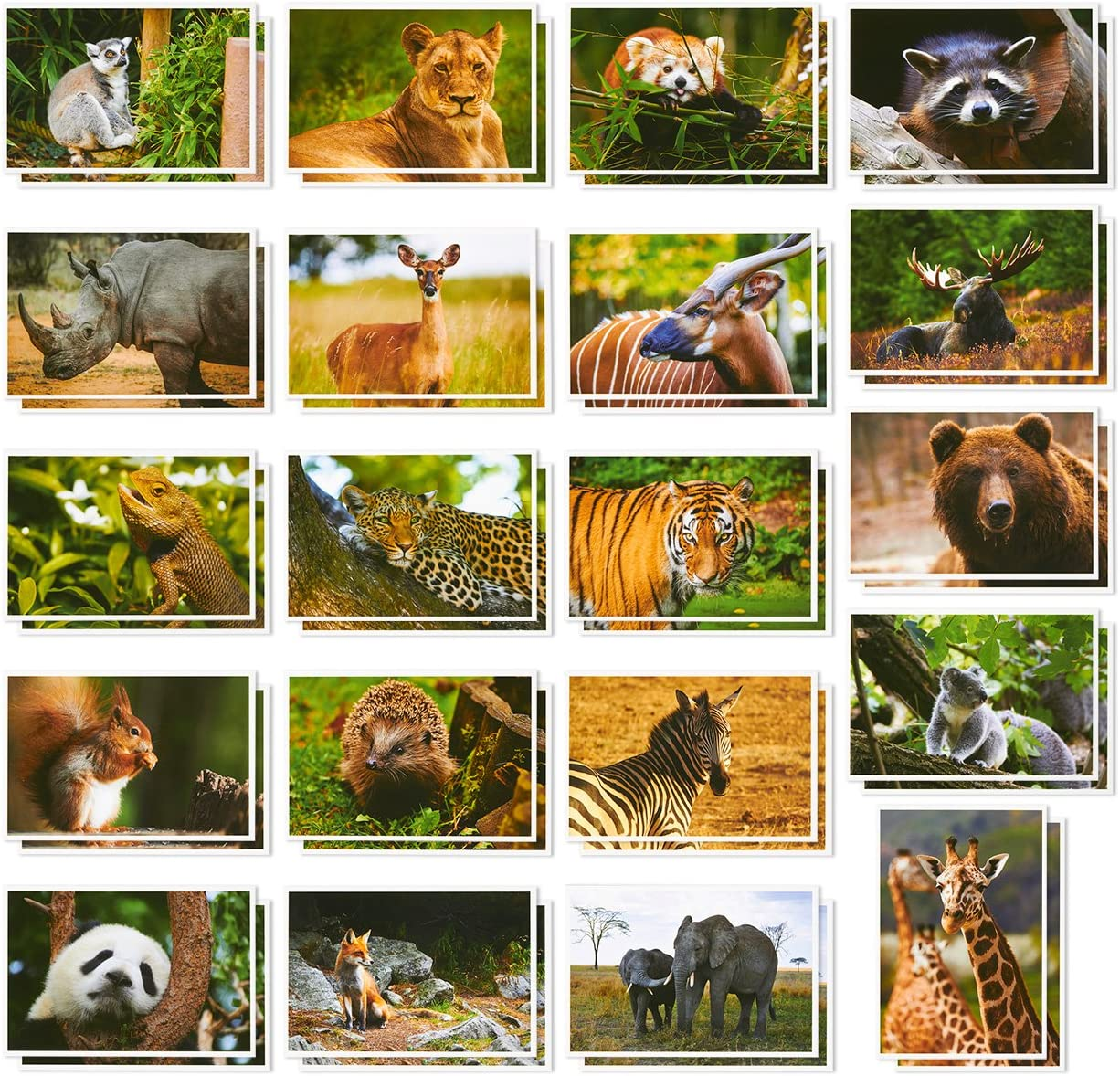 Wild Animal Postcards – 40 Postcards – Bulk Set - Featuring Tigers, Bears, Giraffes, Elephants, & More – 4 x 6 Inches