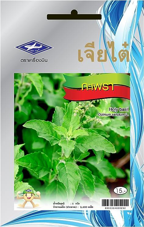 Amazon.com: 2400 Holy Basil semillas (krapao) Tailandia ...