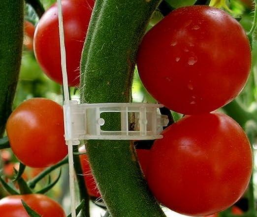 Planta Clips Apoyo tomates, pimientos, Vine Plantas y Flores para ...