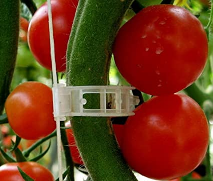 Amazoncom Plant Clips Support Tomatoes Peppers Vine Plants