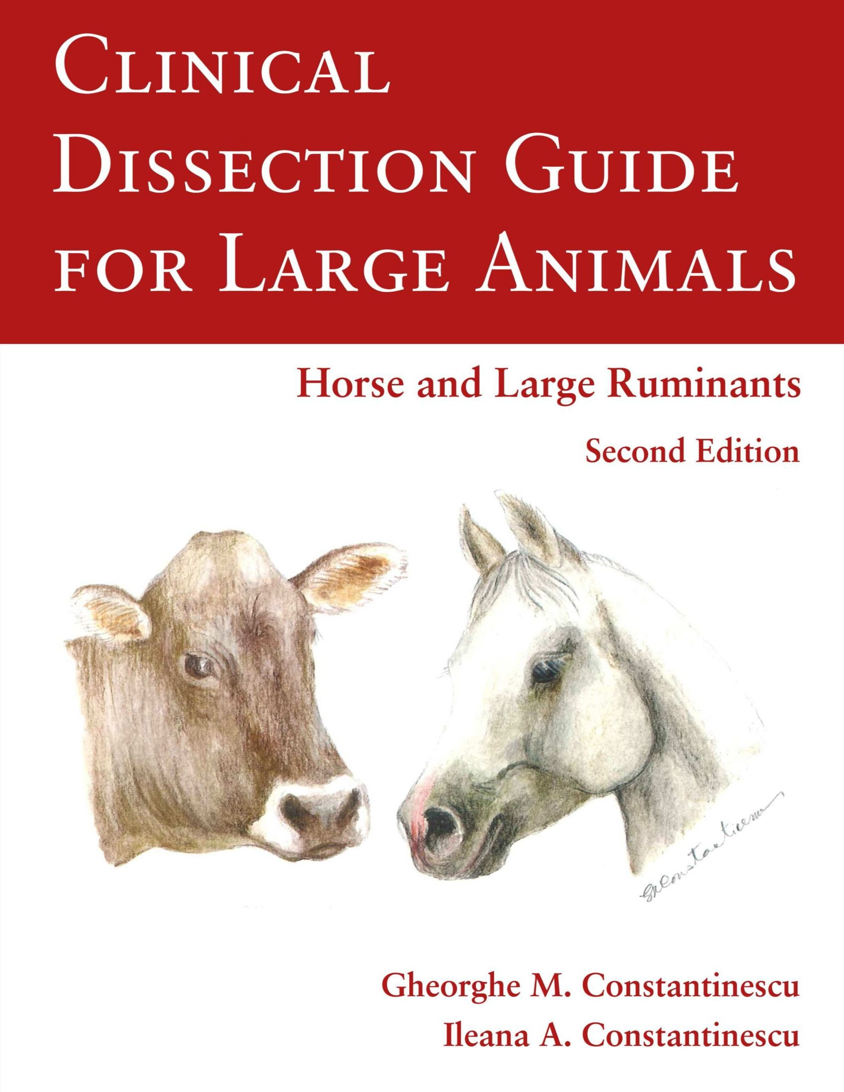 Clinical Dissection Guide For Large Animals: Gheorghe Constantinescu ...