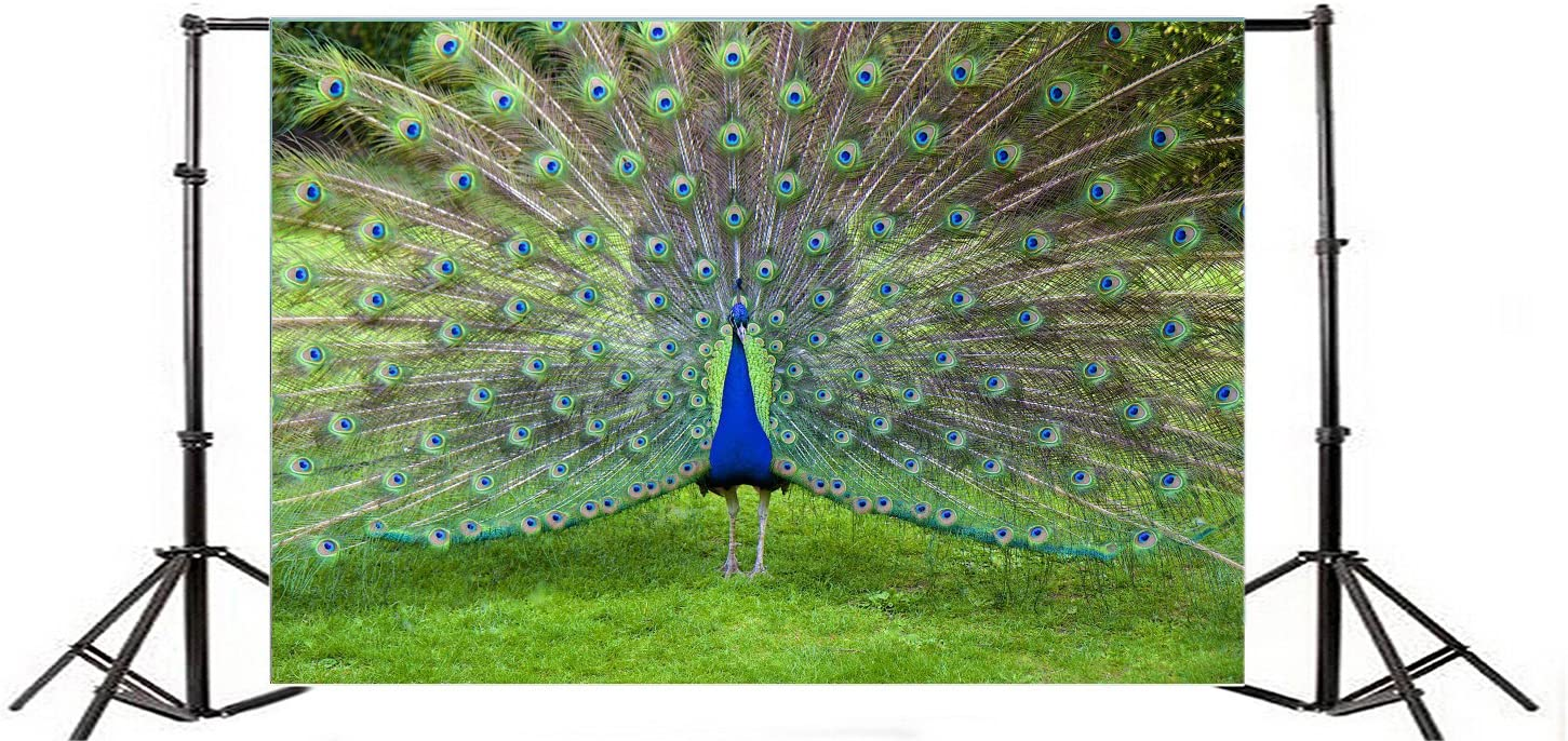 10x8ft Peacock Backdrop Beautiful Colourful Feather Plumage Background for Photography Safari Park Green Grass Outdoors Scenery Photo Booth YouTube Video Shoot Vinyl Studio Props