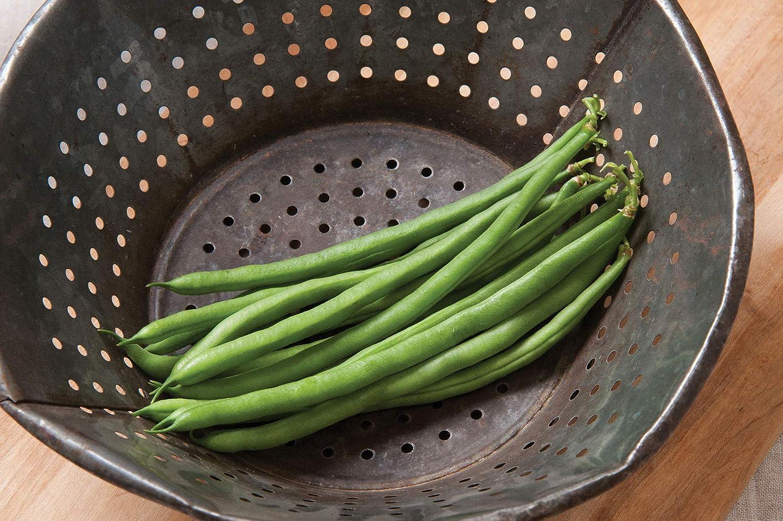 Davids Garden Seeds Bean Bush Top Crop SL0019 100 Non-GMO Heirloom Seeds Green
