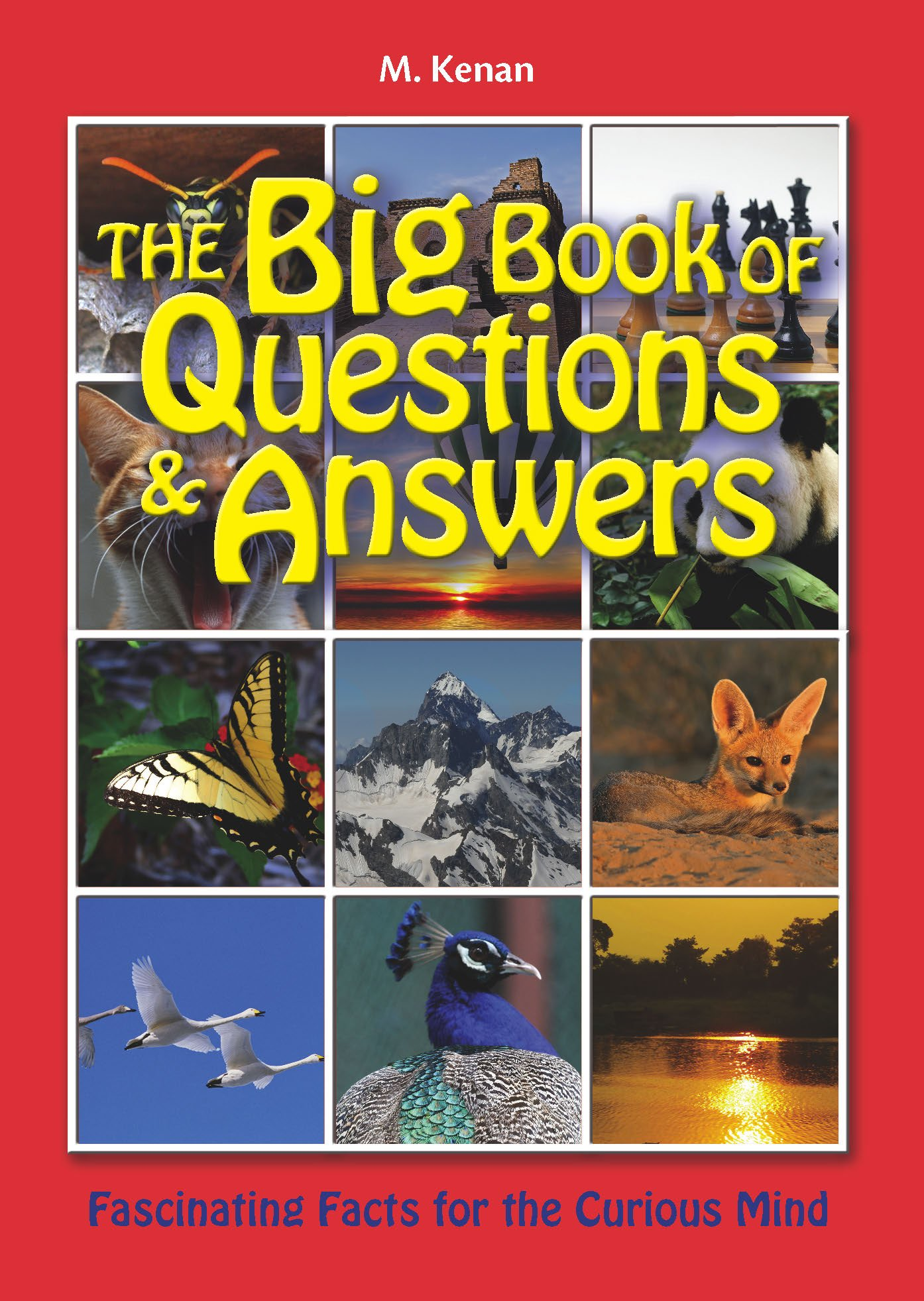The Big Book of Questions & Answers PDF