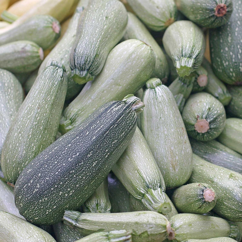 Grey Zucchini Summer Squash Garden Seeds - 1 Lb - Non-GMO, Heirloom - Vegetable Gardening Seed - Gray