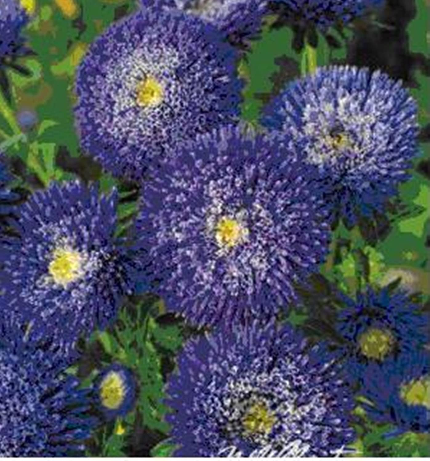 Amazon Organic Flower Seeds Giant Blue Aster 039 039 Princess