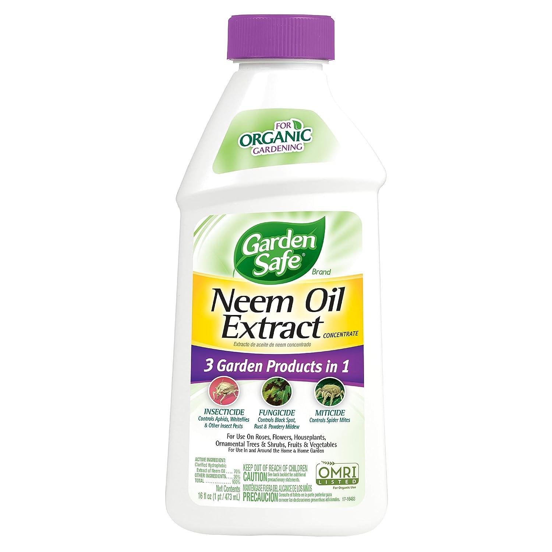 neem oil where to buy