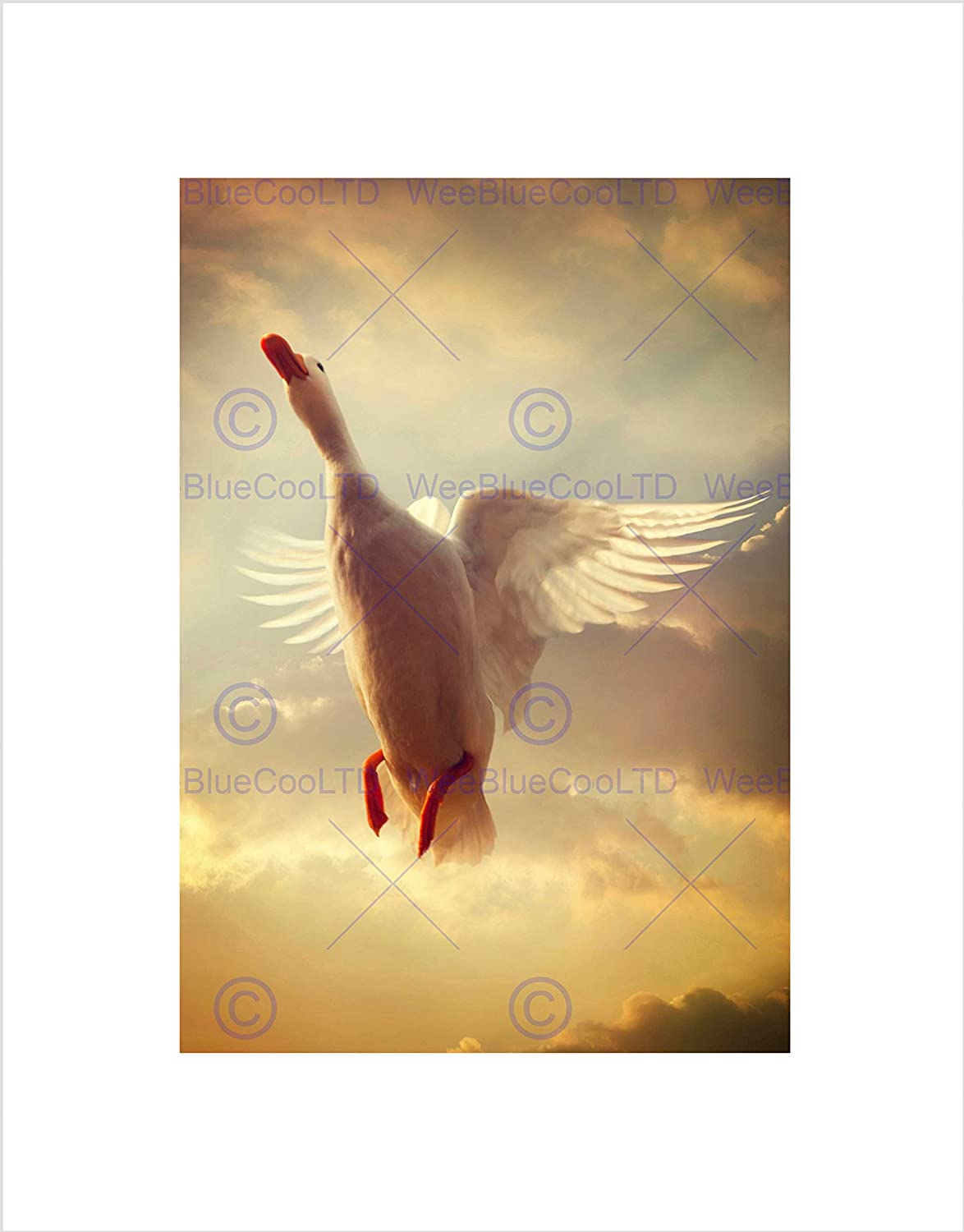 Amazon.com: WHITE DUCK FLYING SKIES BLACK FRAME FRAMED ART PRINT ...