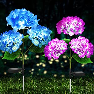Solar Lights Outdoor Decorative - 2 Pack Hydrangea Solar Garden Stake Lights Waterproof and Realistic LED Flowers Powered Outdoor In-Ground Lights for Garden Lawn Patio Backyard (Purple and Blue)