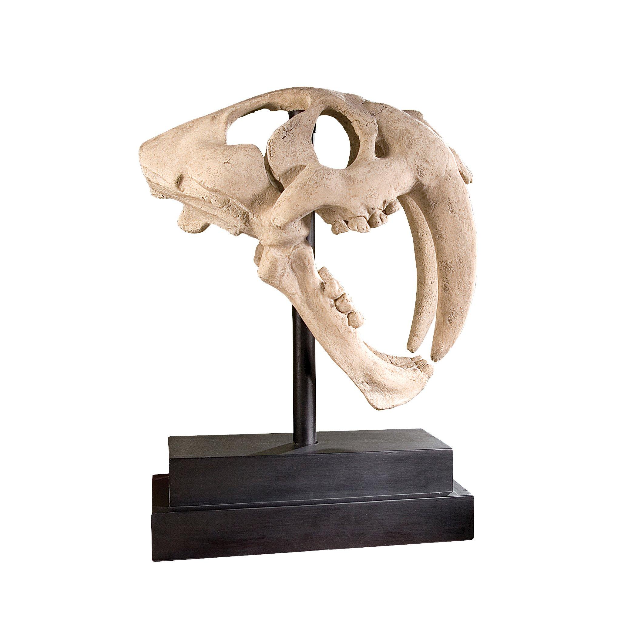 Design Toscano Inc 20.5H in. Saber-toothed Tiger Skull Artifact