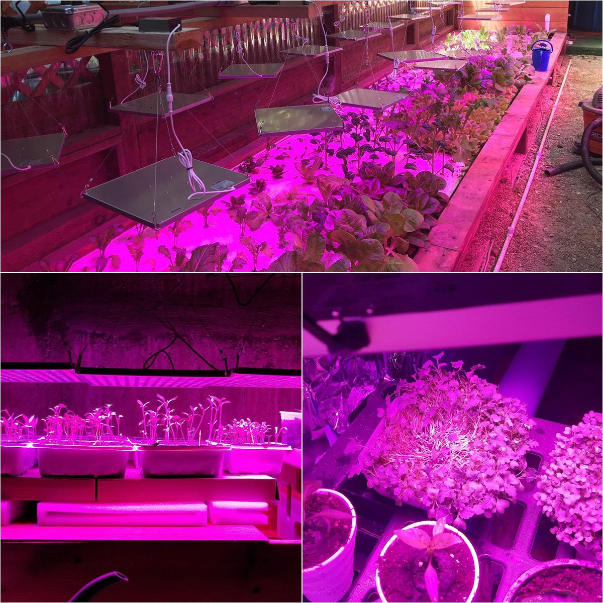 75w Plant Lights with Red /& Blue Spectrum Grow Lamp for Hydroponic Seedling Veg and Flower Roleadro LED Grow Lights for Indoor Plants Succulents 2 Packs
