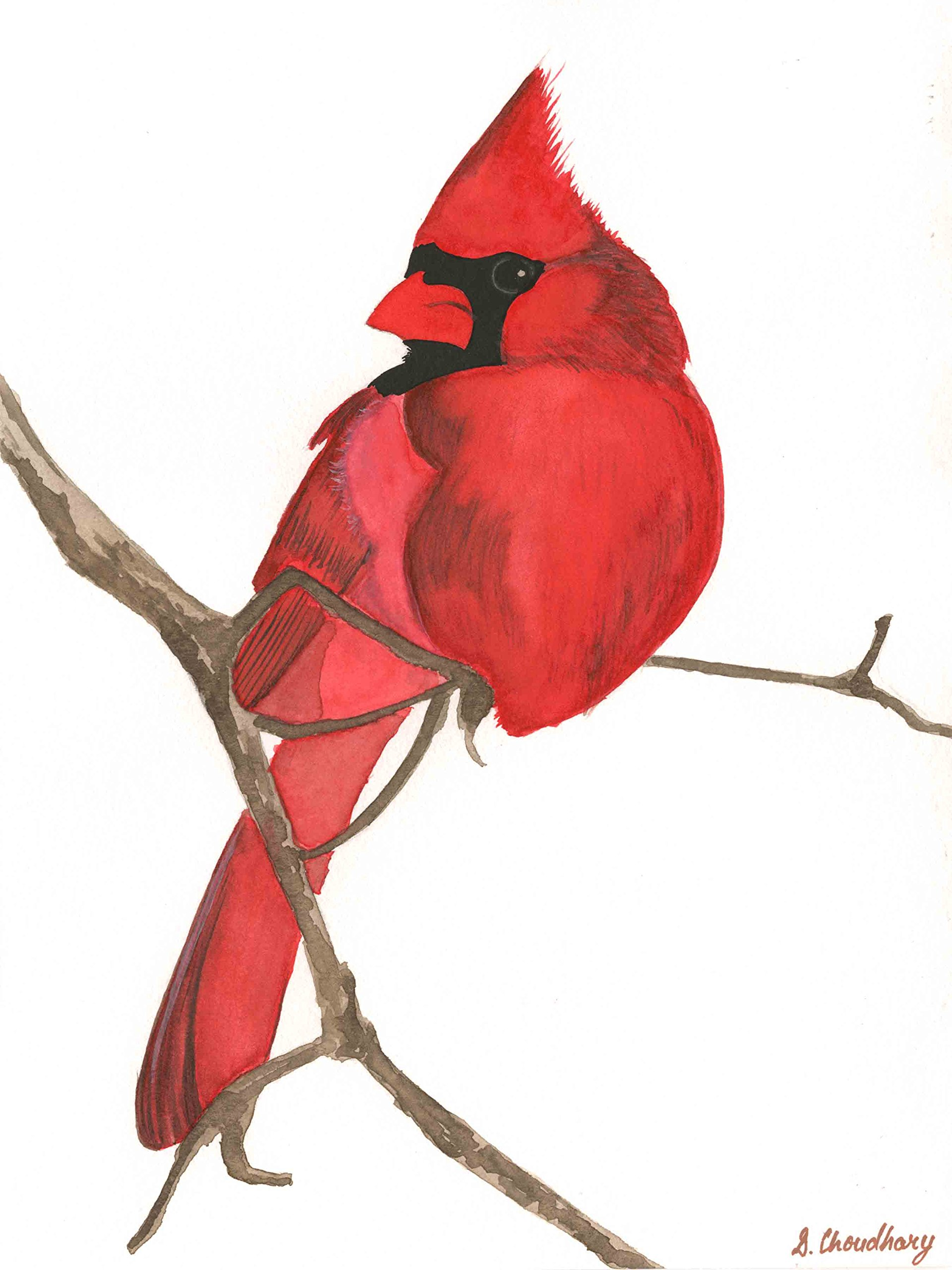 Red Cardinal (Limited Edition on Fine Art Paper - 16x21 in) by