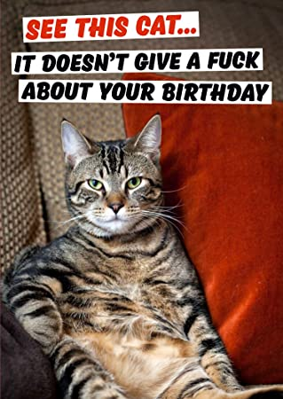 See This Cat It Doesnt Give A Fuck About Your Birthday Rude