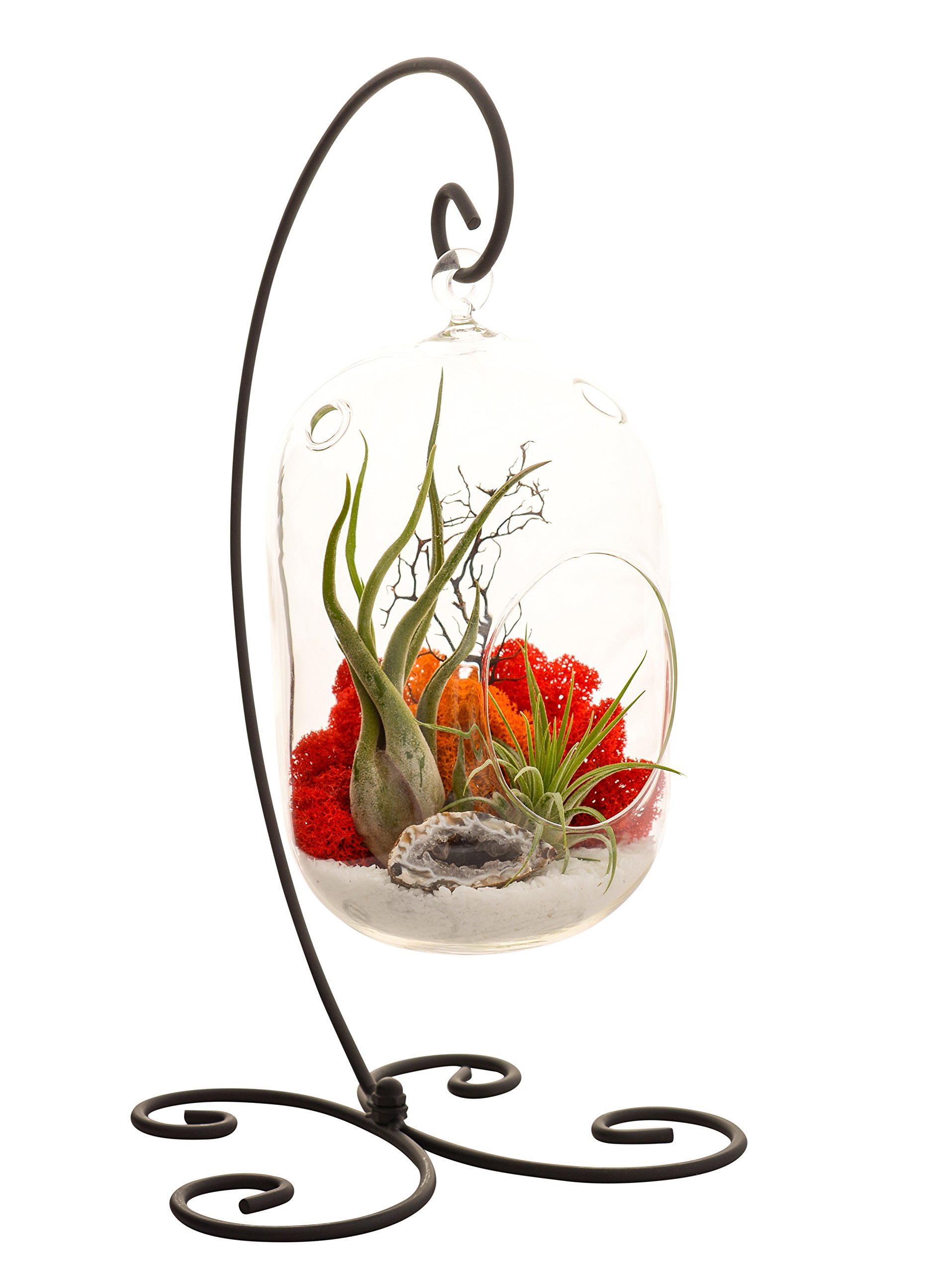 Bliss Gardens Air Plant Terrarium Kit With 8'' Oval Glass/Geode Crystal/Sunburst On Ice/Large Black Metal Stand Included by Bliss Gardens