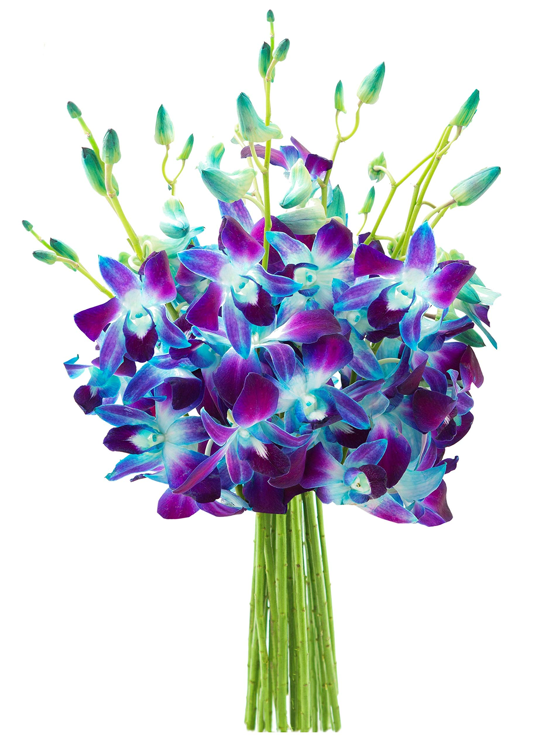 KaBloom Exotic Sapphire Orchid Bouquet of Blue Orchids from Thailand by KaBloom