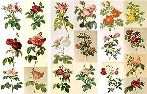 "Decoupage Paper Pack (12 Sheets A4 / 8""x11"") Roses Redoute Flowers FLONZ Vintage Ephemera"