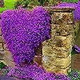 keland garten lila winterharter efeu rank und kletterpflanzen samen 100pcs f r w nde z une. Black Bedroom Furniture Sets. Home Design Ideas