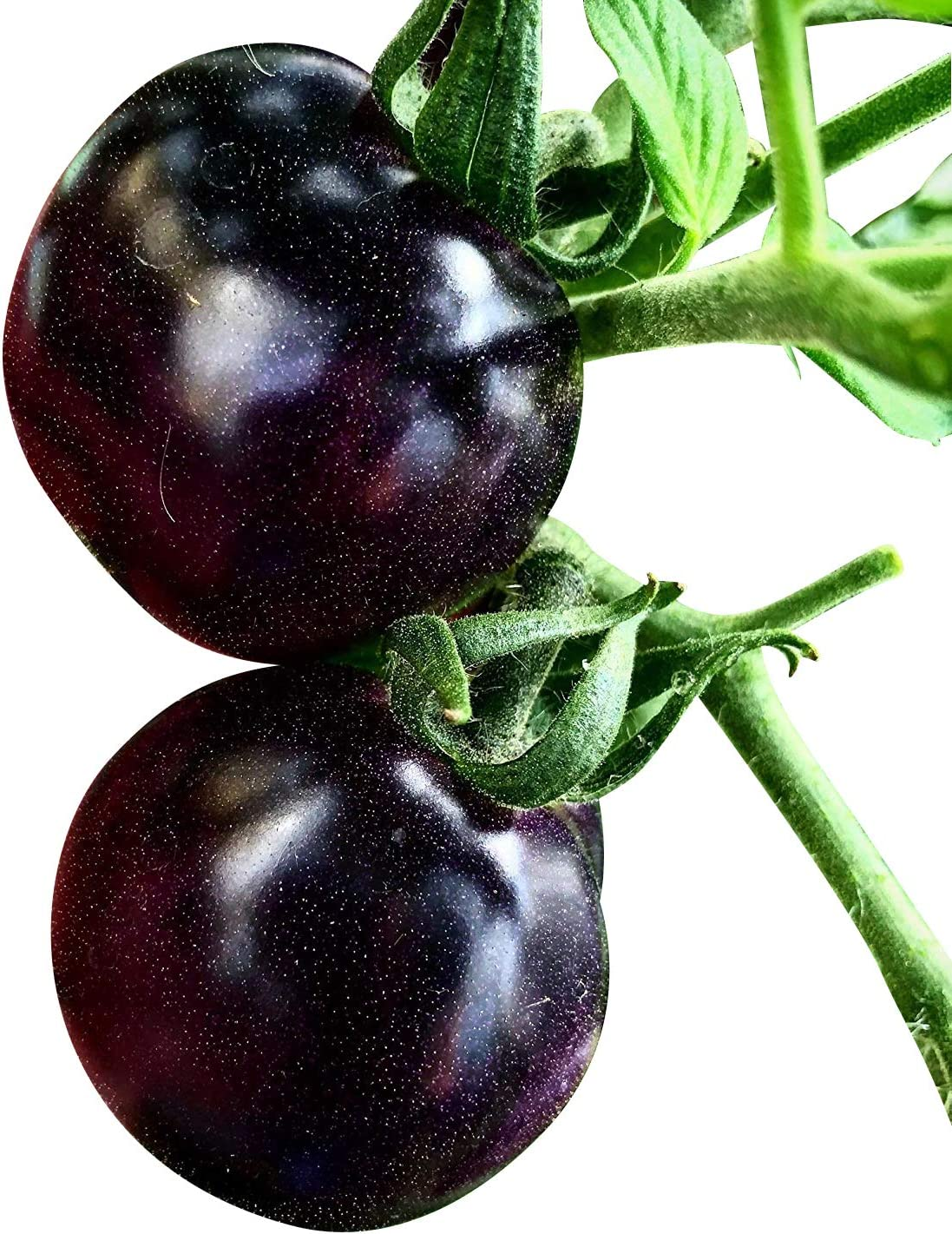 Souked De alta calidad de 20 semillas Purple Tomate Cherry Fruit ...