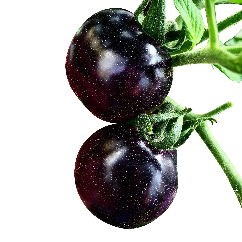 Souked 20 Seeds Purple Cherry Tomato Organic Fruit Vegetable Plant Big Bargain SKUSKD0332129