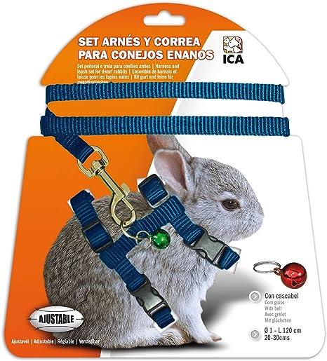 ICA DA1022 Set de Arnés y Correa para Conejos Enanos, Azul: Amazon ...