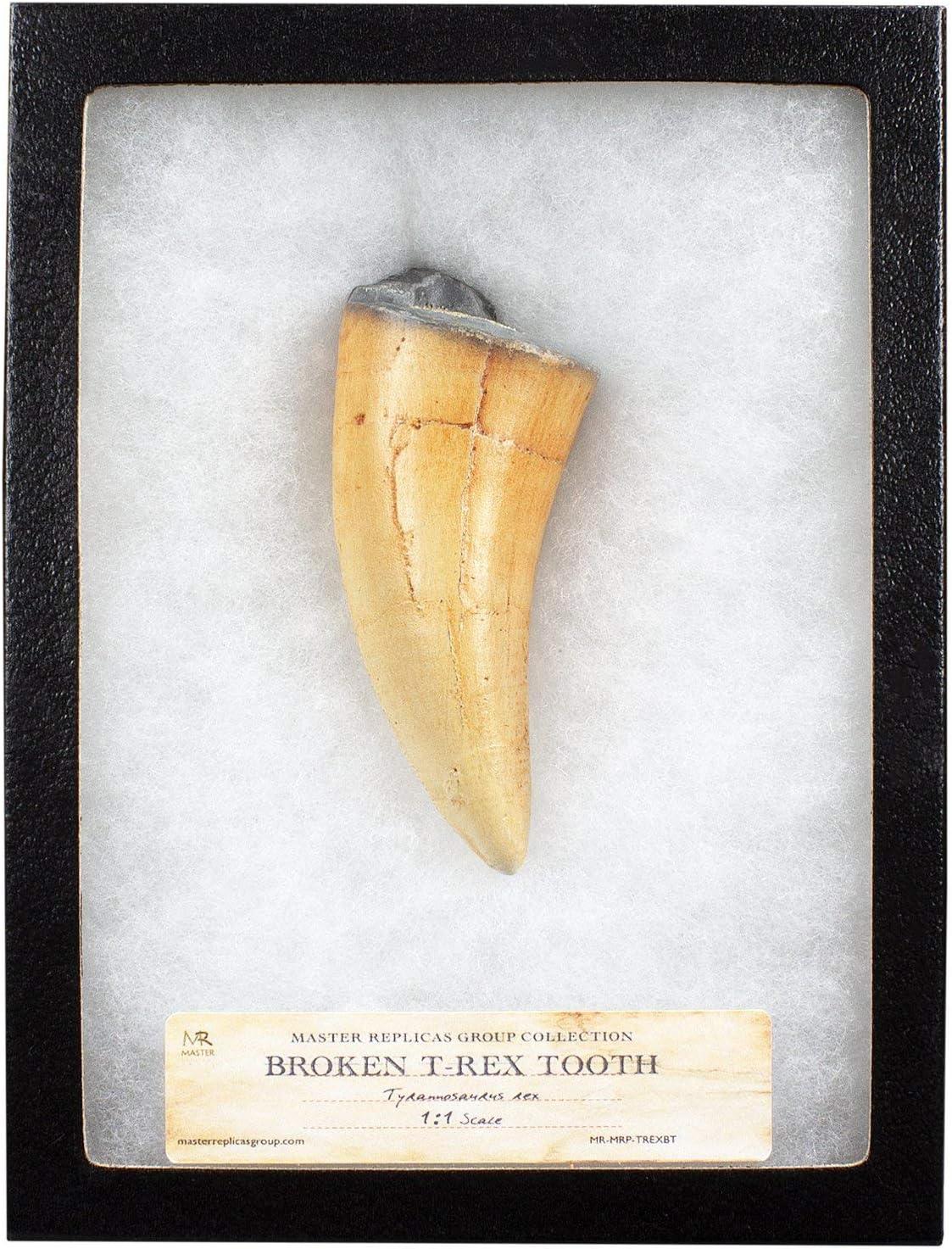 미스터 깨진 T-렉스 치아 화석 복제