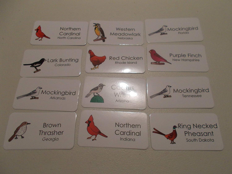 50 Laminated State Birds Flashcards.