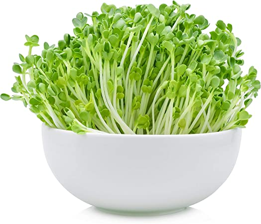 Amazon Com 5 Lb Bulk Non Gmo Arugula Vegetable Seeds For Outdoor