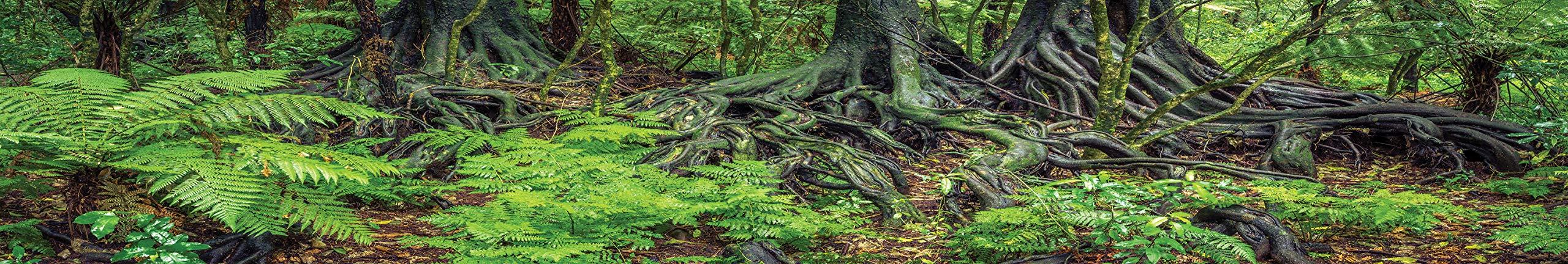 Carolina Custom Cages Reptile Habitat Background; Rain Forest Ferns & Roots, for 48Lx24Wx18H Terrarium, 3-Sided Wraparound by Carolina Custom Cages