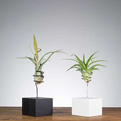 Unique Plant Gift Best Friend Gifts Small Desk Plant White Air Plant Holder Decorative Home Decor Shelf Decor Modern Planter Air Plant Wire Vase Living Room Decor