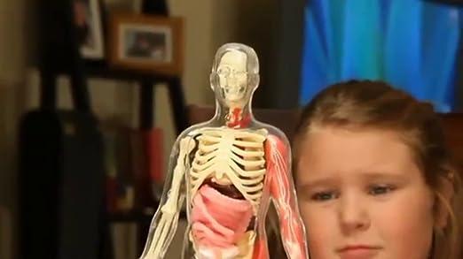 Amazon.com: Smart Lab Squishy Human Body Anatomy Science Kit ...