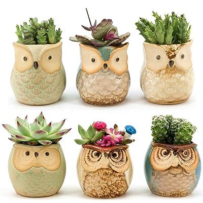 Weierken Mini 6PCS Owl Pot Ceramic Flowing Glaze Base Serial Set Succulent Plant Pot Cactus Plant Pot Valentine's Day Container Planter Bonsai Pots with A Hole: Garden & Outdoor