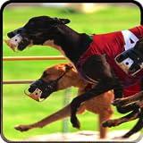 Greyhound Dog Racing 3D