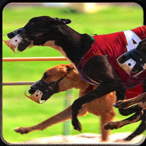 Greyhound Race - Greyhound Dog Racing 3D