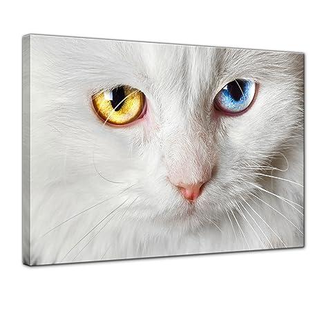 """Bilderdepot24 Cuadros en Lienzo""""Gato blanco con dos colores de ojos"""" 60x50 cm -"""