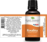Plant Therapy Rosalina Essential Oil 30 mL