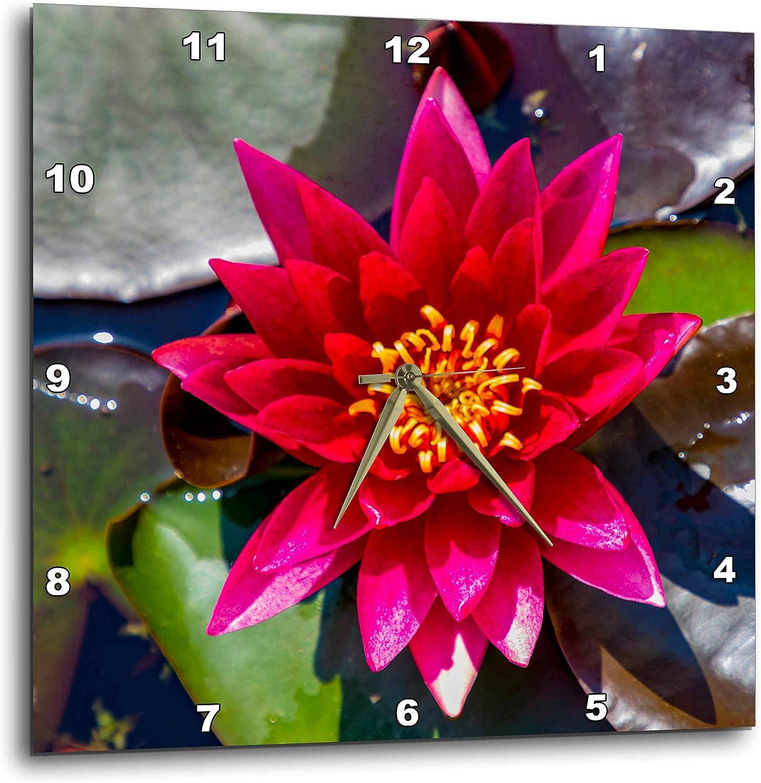 3dRose Croatia, Zagreb. Water Lily Plant in Botanical Gardens. - Wall Clocks (DPP_330500_2)