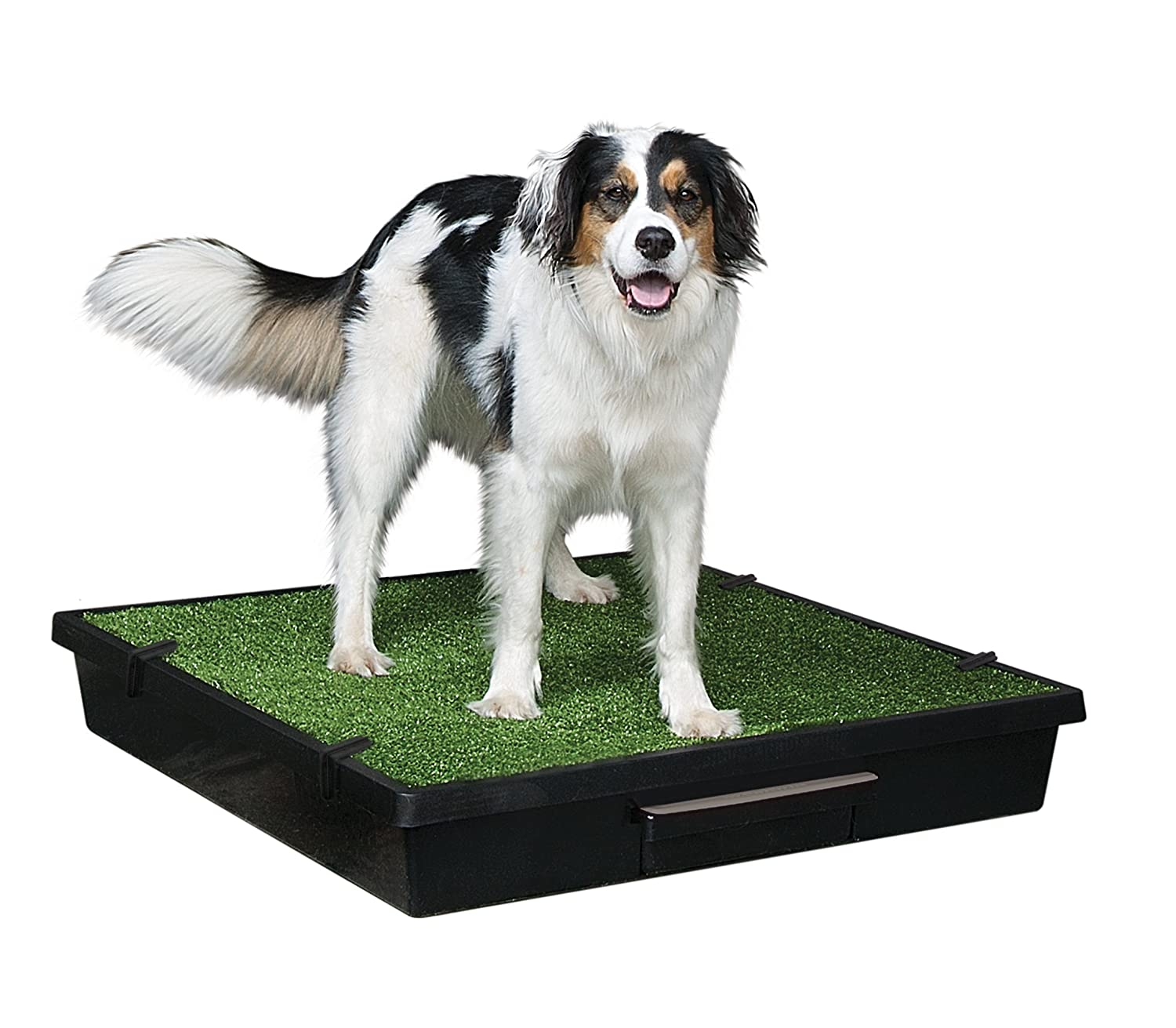 Large PetSafe Pet Loo Portable Indoor Outdoor Dog Potty, Alternative to Puppy Pads, Large