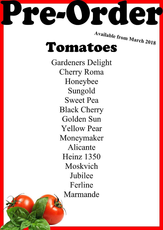 6 x Mix and Match enchufe de tomate Plantas - Pre-order marzo de ...