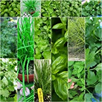 Herb Seeds Basil Coriander Corriander Dill Chives Mint Mixed Aromatic Culinary 5pks