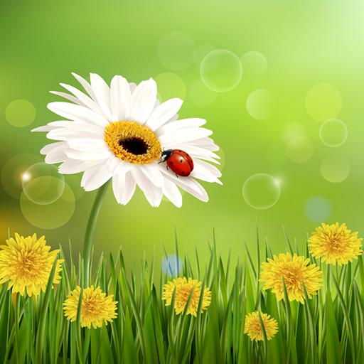 Dandelion Live Wallpapers (Best Summer Grass Seed)
