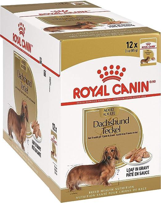 ROYAL CANIN Teckel Alimento húmedo para Perros Salchicha Dachshund - Caja Completa 12 x Sobres 85 gr.: Amazon.es: Productos para mascotas