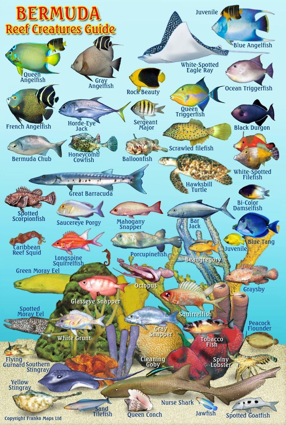 100 puerto rico u2013 laura hooper fort lauderdale for Fishing in bermuda