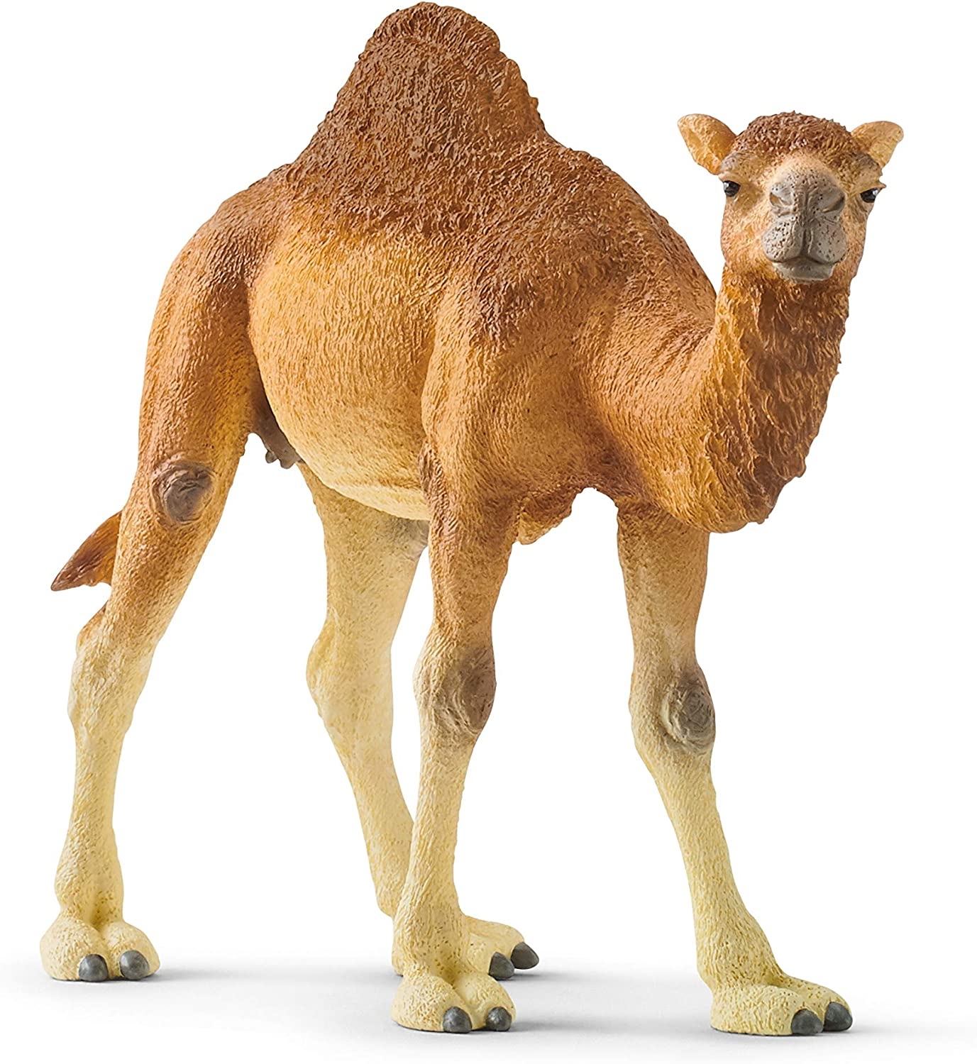 SCHLEICH Wild Life Arabian Camel Dromedary Toy Figurine for Kids Ages 3-8 with 1 Hump