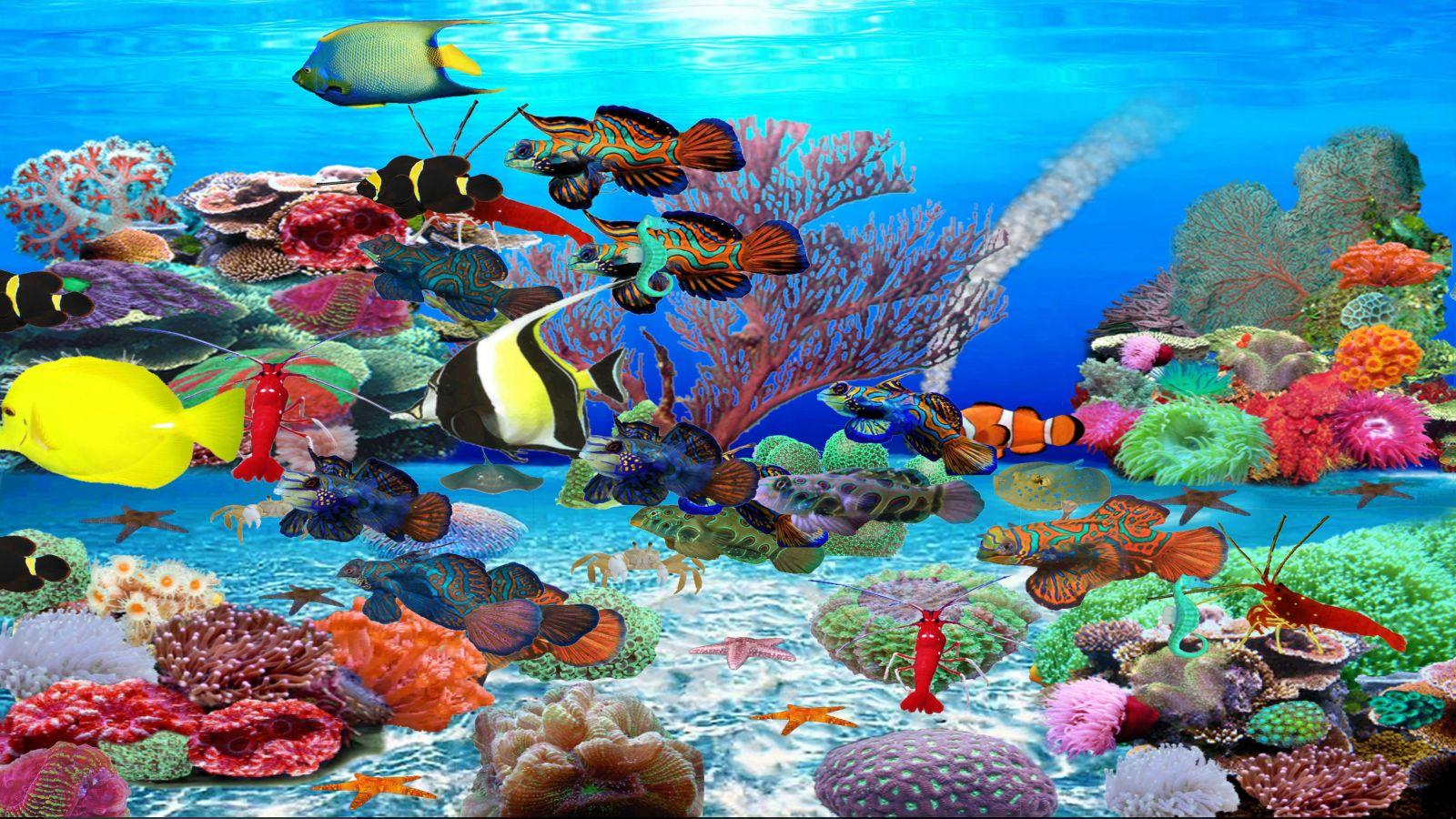 Живые Обои Рыбки На Рабочий Стол