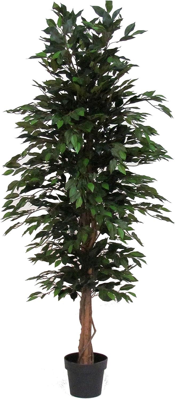Verdevip Ficus Benjamin Variegato Alto 200 cm Largo 70 cm Albero Artificiale da Arredo Interno con Tronco Vero