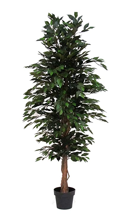 Verdevip Ficus Benjamin Verde   Albero Artificiale Da Arredo Interno Con  Tronco Vero   Alto 175