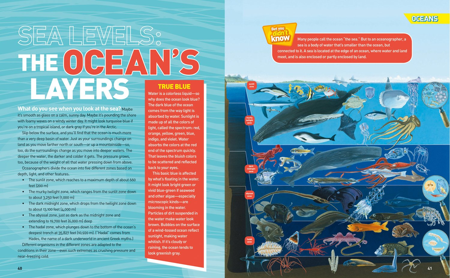 Ultimate Oceanpedia: The Most Complete Ocean Reference Ever (National Geographic Kids) by National Geographic Society (Image #3)