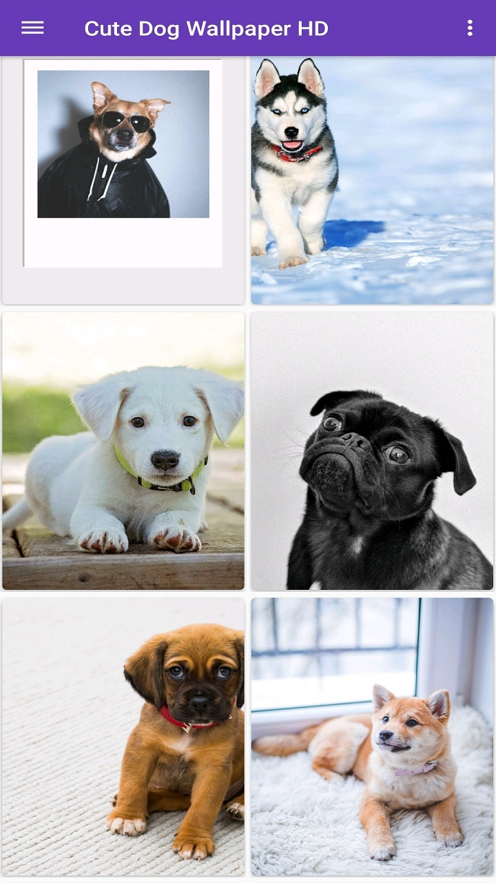 Cute Dog Wallpapers Hd Amazones Appstore Para Android