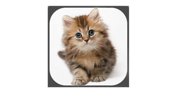 Gatos - Gatitos divertidos - Memes: Amazon.es: Appstore para ...
